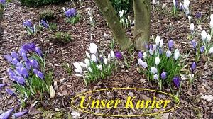Frühling©Kyffhäuser Kameradschaft Steyerberg e.V.